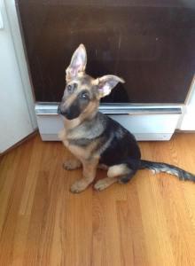 Someone's got her big girl ears!